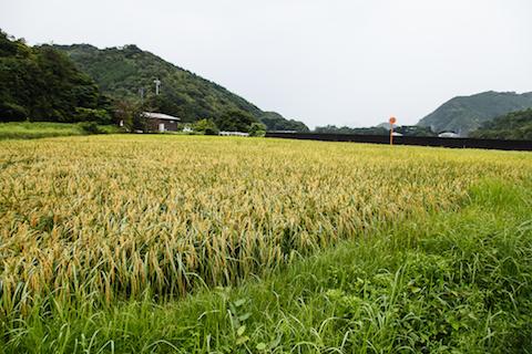 社屋の目の前には、社員が米作りをする田んぼが広がっている。