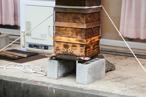 美波Labに置かれた巣箱。たくさんの蜂が出入りしているのが見える。
